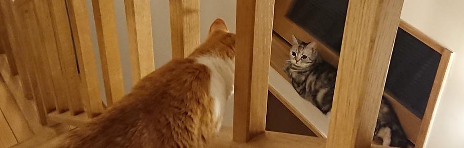 青猫荘の猫たち